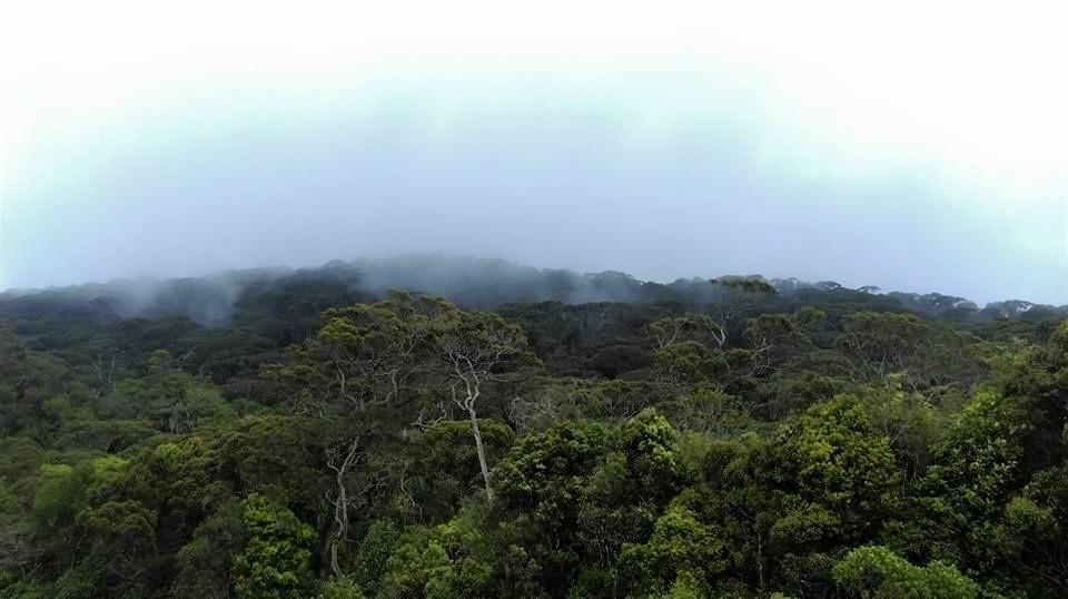 field visit to rainforest ecolodge biodiversity sri lanka. Black Bedroom Furniture Sets. Home Design Ideas